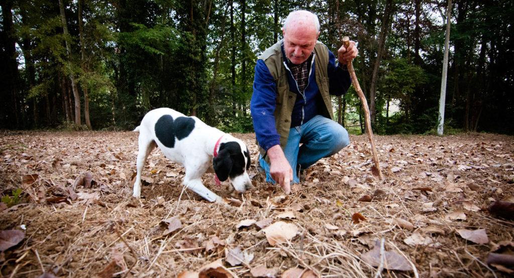 Truffle hunting Piedmonte Italy