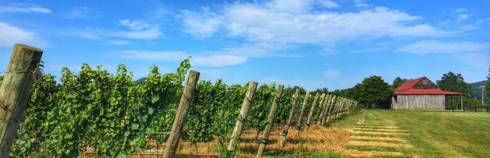 Charlottesville, VA Winery